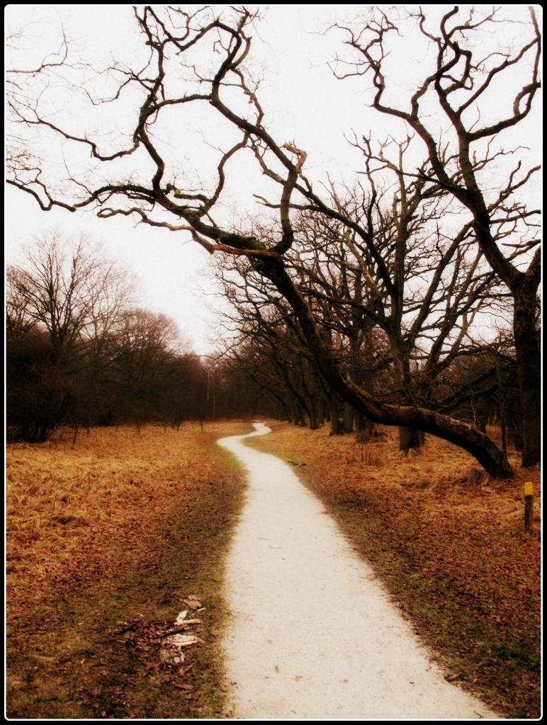 Path by halkia