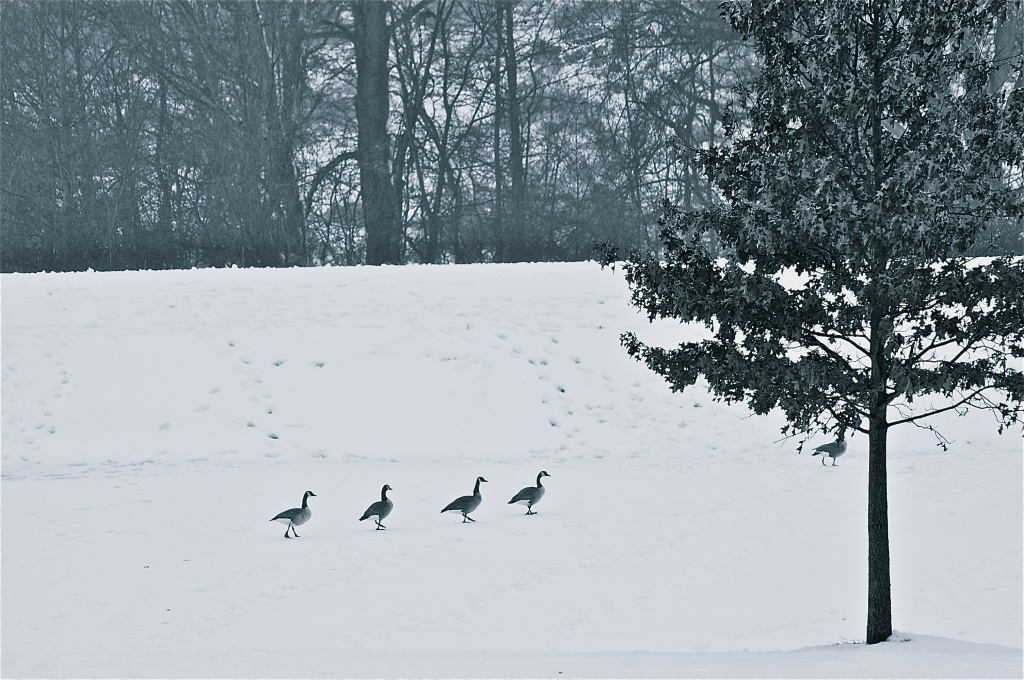 Going on a wild goose chase. by kdrinkie