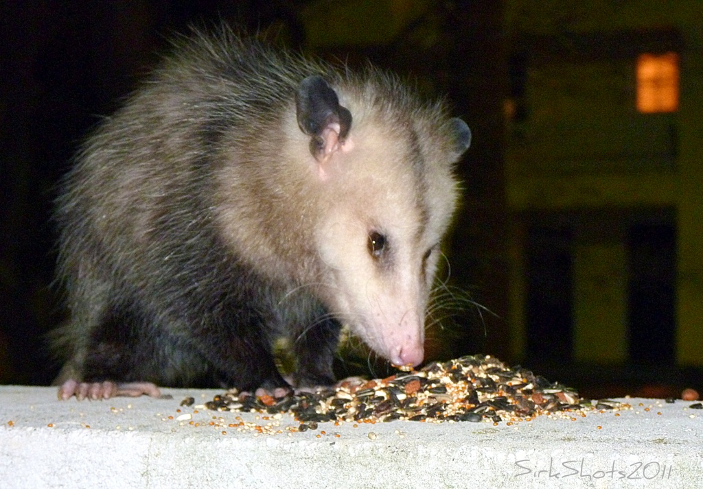 Groundhog Day by peggysirk