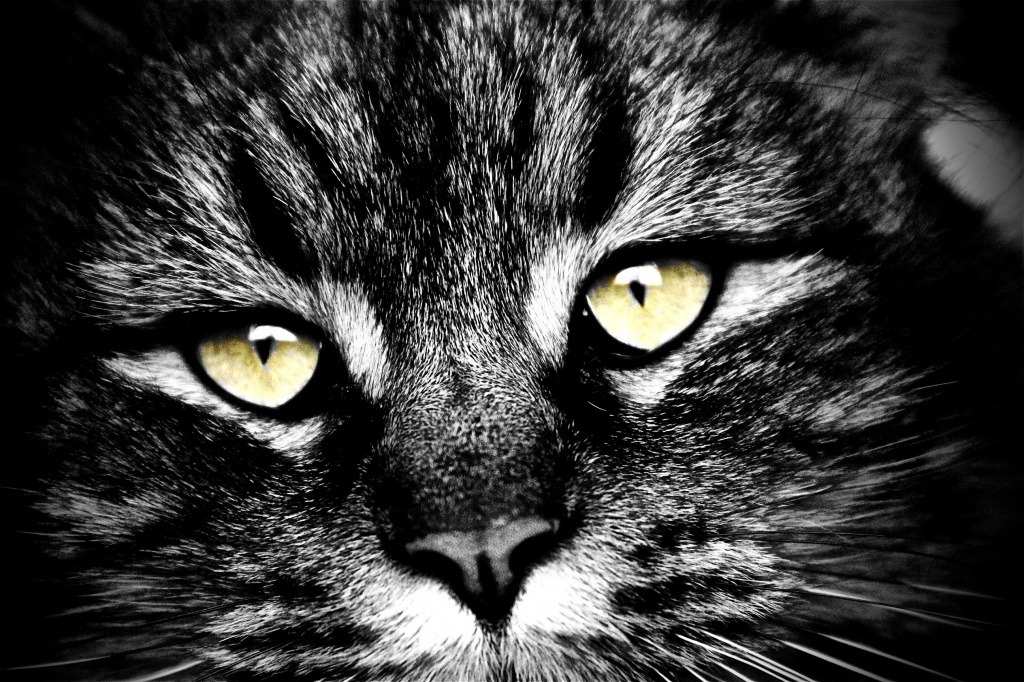 Our Cat Cocoa by exposure4u