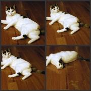 1st Feb 2011 - The joys of catnip