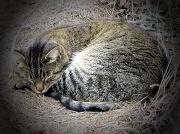 3rd Feb 2011 - Cat Nap
