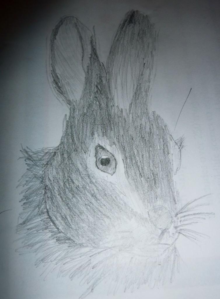 Rabbit Art by helenmoss