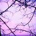 Pink Sky by mej2011