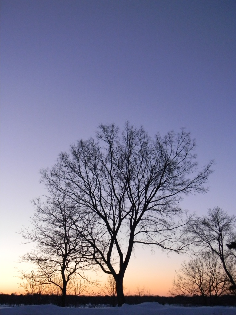 Another tree or two by pfmandeville