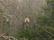 4th Feb 2011 - Raindrops keep falling on my head