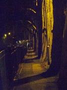 5th Feb 2011 - Night walk