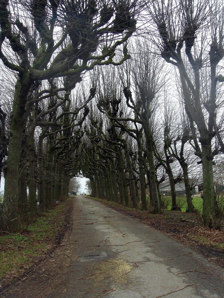 lime-tree avenue/lindelaan by gijsje
