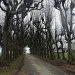 lime-tree avenue/lindelaan by gijsje