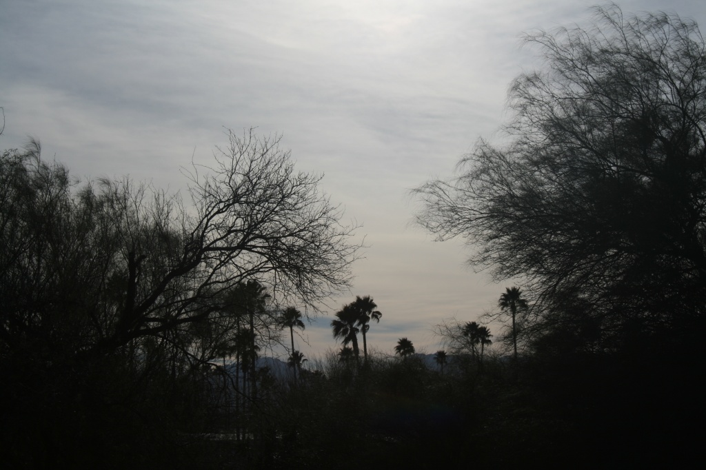 More Palm Trees!! by kerristephens