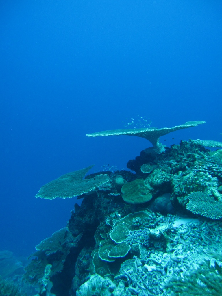 went scuba diving today for the first time in a few years, in spite of heavy rain, the dive was magnificent  by lbmcshutter