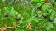 21st Nov 2009 - Five snails