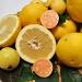 Grapefruit & Guava by Weezilou