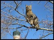 6th Feb 2011 - Bird Watching