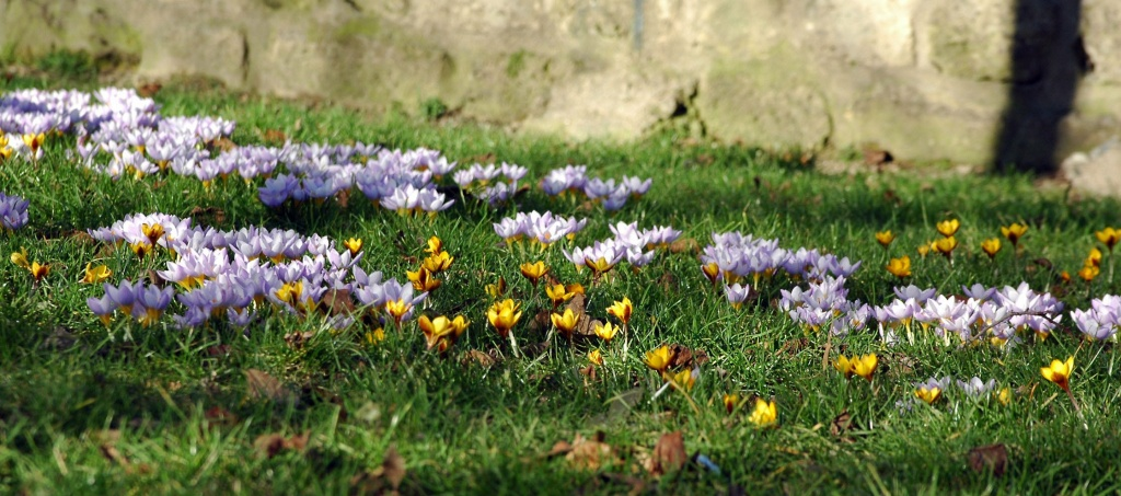 Looks like spring is coming! by parisouailleurs