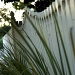 F is for Fence in Foliage by fillingtime