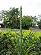 7th Feb 2011 - Unusual Plant
