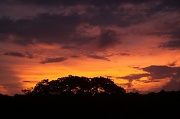 9th Feb 2011 - the wet season makes for good sunsets on those odd occasions it stops raining