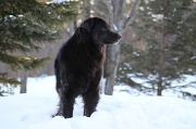 9th Feb 2011 - Scruffy the Worst Dog Ever