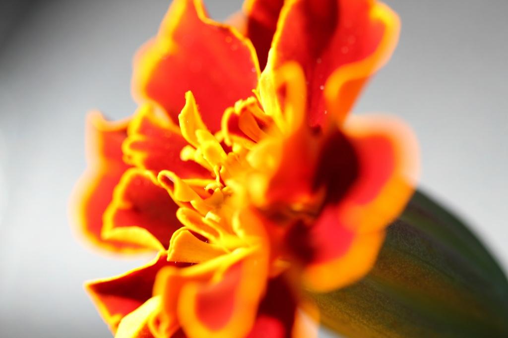fire by orangecrush